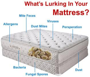 Carpet Cleaning Kill Bed Bugs