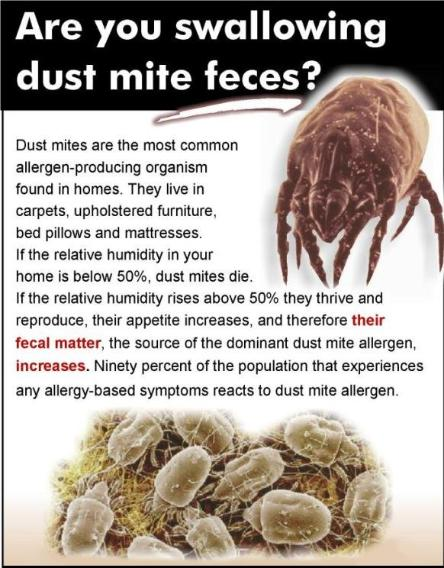 are you swalling dust mites